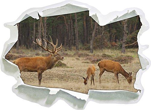 famille-hirsch-en-automne-foret-clairiere-taille-de-sticker-mural-papier-3d-62x45-cm-decoration-mura