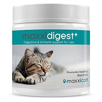 maxxicat - maxxidigest+ Probiotiques, Prébiotiques et Enzymes Digestives pour Chats - Complément avancé pour Le Système digestif et Le Système immunitaire des Chats - Poudre sans OGM - Poudre 200 g