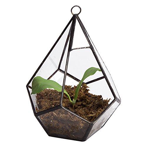 Asvert Maceta para Plantas de Desierto Forma Geométrica Cristal Adorno Hogareño para Florita Decoración Sobremesa para Casa Oficina Balcón Patio y Hotel