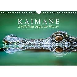 Gefährliche Jäger im Wasser: Kaimane (Wandkalender 2014 DIN A4 quer): Lebende Fossilien (Monatskalender, 14 Seiten)