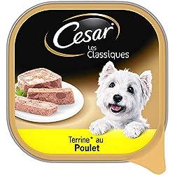 CESAR Les Classiques - Barquettes de poulet en terrine pour chien adulte, 20 barquettes de 300g