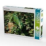 CALVENDO Puzzle Jemenchamäleon 2000 Teile Lege-Größe 90 x 67 cm Foto-Puzzle Bild von Kattobello