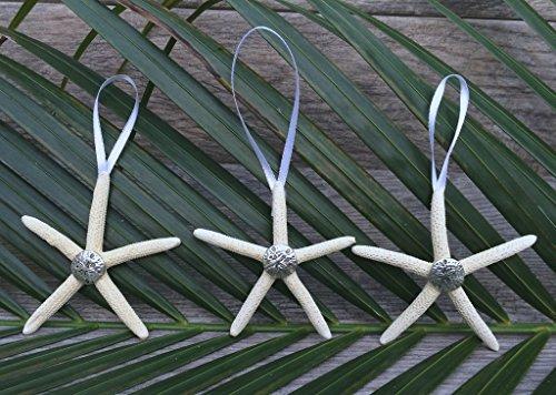 Nautisches Crush tradingtm-Natur Seestern 10,2cm Weihnachten Ornament mit Silber Sand Dollar-Set von 3 (Sand-dollar-hochzeit Dekor)
