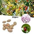 BigFamily Sakura-Baum-Samen 20 Stück Kirschblütenbaum Samen Blumen Pflanzen Samen von BigFamily bei Du und dein Garten