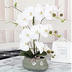 Hctina Künstliche Fake Blume Orchidee weiß im Garten pflanzen Topfpflanzen