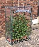 Gewächshaus für Tomatenanzucht Tomatengewächshaus Tomaten
