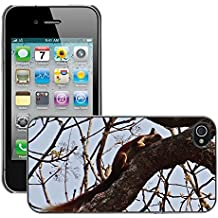 Grand Phone Cases Carcasa Funda Prima Delgada SLIM Casa Case Bandera Cover Shell para // M00140787 Malabar scoiattolo gigante Ratufa // Apple iPhone 4 4S 4G