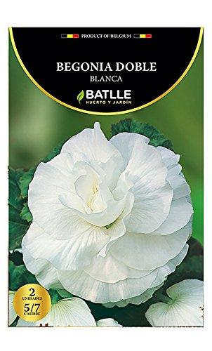 Samen Batlle–Begonien Weiß