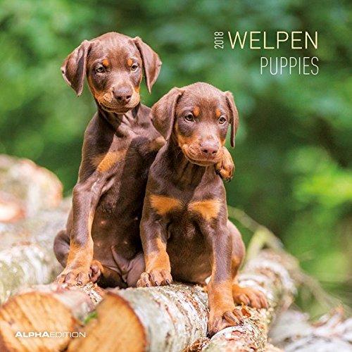 Welpen 2018 - Puppies - Broschürenkalender (30 x 60 geöffnet) - Tierkalender - Wandplaner