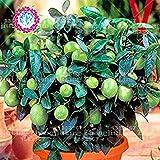 Vistaric 20 stücke seltene lemon baum grün Bio obst samen bonsai limetten samen grün gesunde lebensmittel einfach zu wachsen blumentopf
