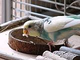 Sitzbrett mit Kokosschale