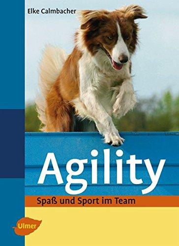 Agility: Spaß und Sport im Team