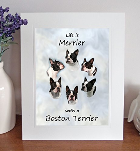 Boston Terrier 'Life is Merrier' Free Standing 10 x 8 Mounted Picture by Something Special Gift Shop -
