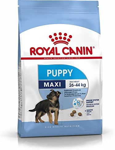 Royal Canin : Croquettes Chiot Shn Maxi Junior : 4 Kg