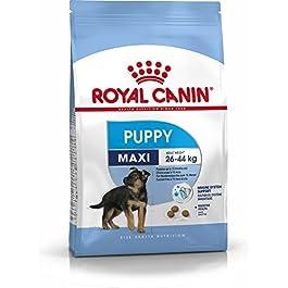 Royal Canin Maxi Junior 32