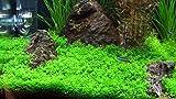 ** COLOURFUL AQUARIUM ** Aquarium Artificial / Plastic Plant for Decoration - 16