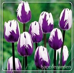 Idea Regalo - Pinkdose 100 pz Tulip Flores Bonsai, Non Bulbi di Tulipano, Hydroponic Bonsai Flower Tulip Bonsai, Garden Decoration Bonsai Piante da Fiore: 2