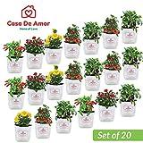 Casa De Amor Plant Bags (Pack of 20, White)