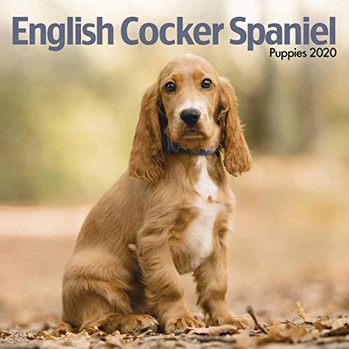 English Cocker Spaniel Puppies Mini Square Wall Calendar 2020