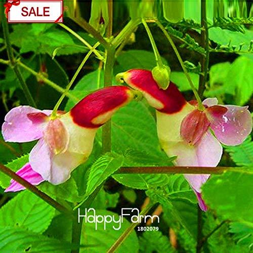 Bloom Green Co. Les meilleures ventes! Chine Rare Parrot Orchid Flower Plantes Mondes Rare High Grade Garden Bonsai Accueil Plantas 50 particules/paquet, WZ671N