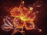 Artland Qualitätsbilder I Glasbilder Deko Glas Bilder 80 x 60 cm Botanik Blumen Digitale Kunst Rot D8UE Feuerblume