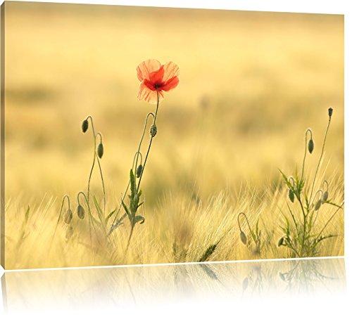 fiori tulipano rosso in campo dipinti su tela, Immagini XXL completamente incorniciati con telai di grandi dimensioni cuneo. Stampa artistica su quadro a parete con cornice. Più economico di pittura o di un dipinto a olio, non un manifesto, Leinwand Format:120x80 cm