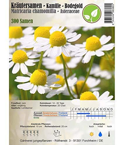 Kräutersamen - Kamille/Matricaria chamomilla - verschiedene Sorten(Bodegold)