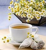 Kamille Samen - Matricaria chamomilla