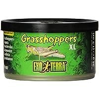 Exoterra Aliment Sauterelles Sauvages XL pour Reptiles et Amphibiens 34 g