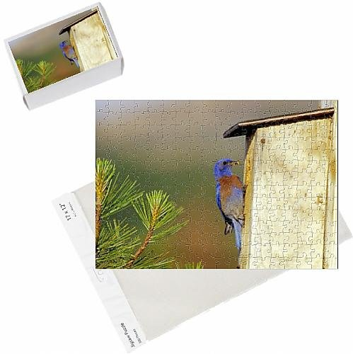 photo-jigsaw-puzzle-of-western-bluebird-male-bringing-insect-back-to-young-in-nest-box