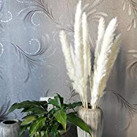XINGXIAOYU Pampas Grass Dried Flower Decoration, 12 Small Reeds, Shooting Props, Home Decoration@White