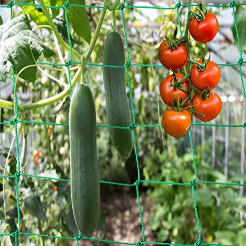 Ranknetz Premium mit großer Maschenweite für den perfekten Wachstum von Gurken, Tomaten und Kletterpflanzen Das Optimale Rankhilfe Netz für Garten und Gewächshaus - Größe 3,5 x 2m