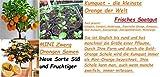 5x Kumquat kleinste Orange der Welt Samen Obst Pflanze Garten Zimmer Neu #266