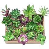 KUUQA 16 piezas de plantas artificiales carnosas mixtas, tallos de decoración sin maceta, plantas carnosas de imitación, surtidas, para decoración del hogar, decoración de pared, jardín, bricolaje