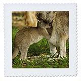 3dRose QS 72780_ 2Australien, Queensland, Eastern grau