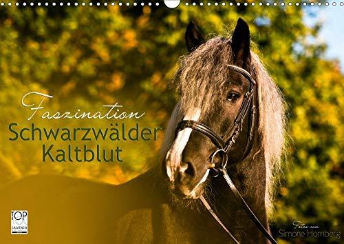 Faszination Schwarzwälder Kaltblut (Wandkalender 2020 DIN A3 quer): Kraftvoll, elegant und verspielt begleitet Sie das Schwarzwälder Kaltblut Pferd ... (Monatskalender, 14 Seiten ) (CALVENDO Tiere)