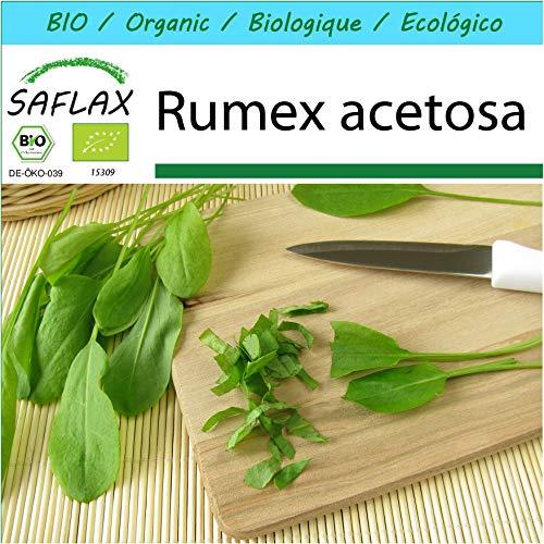 SAFLAX - Kit cadeau - BIO - Oseille commune - 400 graines - Avec boîte cadeau/d'expédition, autocollant d'expédition, carte cadeau et substrat de culture - Rumex acetosa