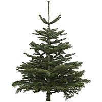 Dominik Blumen und Pflanzen, Weihnachtsbaum Nordmanntanne, 100-120 cm, geschlagen