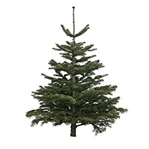 echter weihnachtsbaum nordmanntanne h he ca 100 125 cm. Black Bedroom Furniture Sets. Home Design Ideas