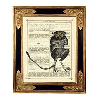 Lemur Madagaskar Poster Kunstdruck auf viktorianischer Buchseite Zoologie Geschenk Bild ungerahmt