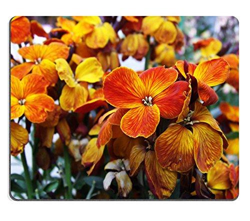 Preisvergleich Produktbild Liili Mauspad Naturkautschuk Mousepad eine schöne Blume Worth Leiden und pflastermüde Endless Miles zu sehen Bild-ID 22542587