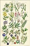 Poster 40 x 60 cm: Wildblumen von Ken Welsh/Design Pics - Hochwertiger Kunstdruck, Kunstposter