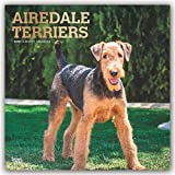 Airedale Terriers 2020 - 16-Monatskalender mit freier DogDays-App: Original BrownTrout-Kalender [Mehrsprachig] [Kalender] (Wall-Kalender)