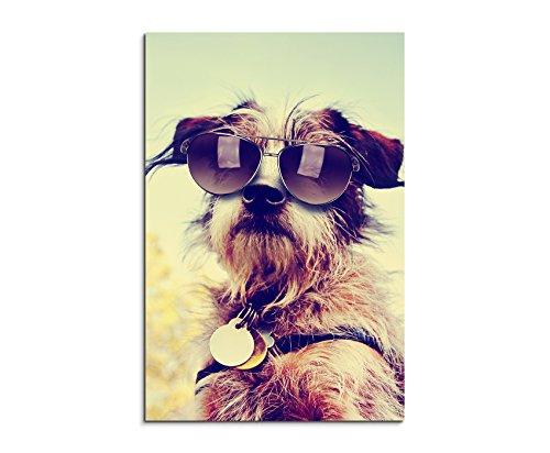 Fotoleinwand 90x60cm Tierfotografie - Cooler Chihuahua Terrier mit Sonnenbrille