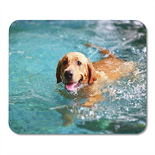 Mouse Pads Blue Pool Labrador Retriever Happy Dog Swimming Smiling Brown Family Calm Mouse pad 25 X 30 CM -