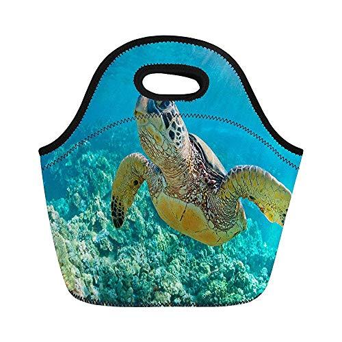 Green Maui Sea Turtle Over Coral Reef in Hawaii Isolierte Neopren Lunch-Taschen für Frauen für Arbeit Erwachsene Herren Kinder Picknick Lunchbox Modern Lunchbox -