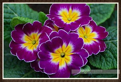 Mixed 10 Variétés Calla Graines Graines Aethiopica Fleur A Paquet 100 Pièces Jardin Décoration Graines Bonsai Fleur