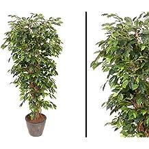 Kunstpflanzen Discount suchergebnis auf amazon de für kunstpflanze ficus benjamini