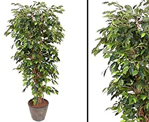 ficus benjamini multistamm h he 150cm kunstb ume kunstbaum k nstliche b ume. Black Bedroom Furniture Sets. Home Design Ideas