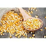 Dhawak Pop Corn Kernels - 900 Grams (Premium Quality)
